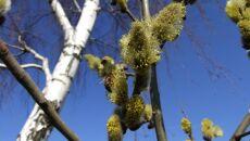 Pracowite pszczoły zbierające pyłek
