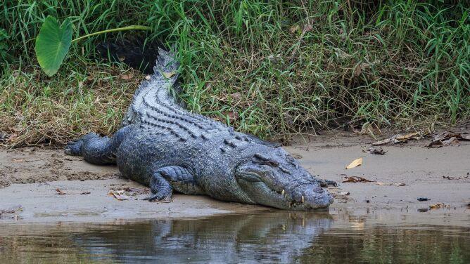 Wybrał się na ryby, był poszukiwany. We wnętrzu krokodyla znaleziono ludzkie szczątki