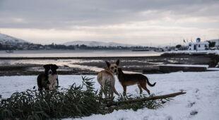 Zima w Grecji (PAP/EPA/WASSILIS ASWESTOPOULOS)